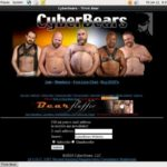Cyber Bears 가입하기
